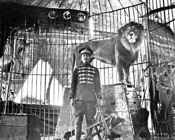 domador y leones del circo