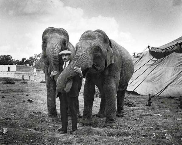 Domador y elefantes del circo beas